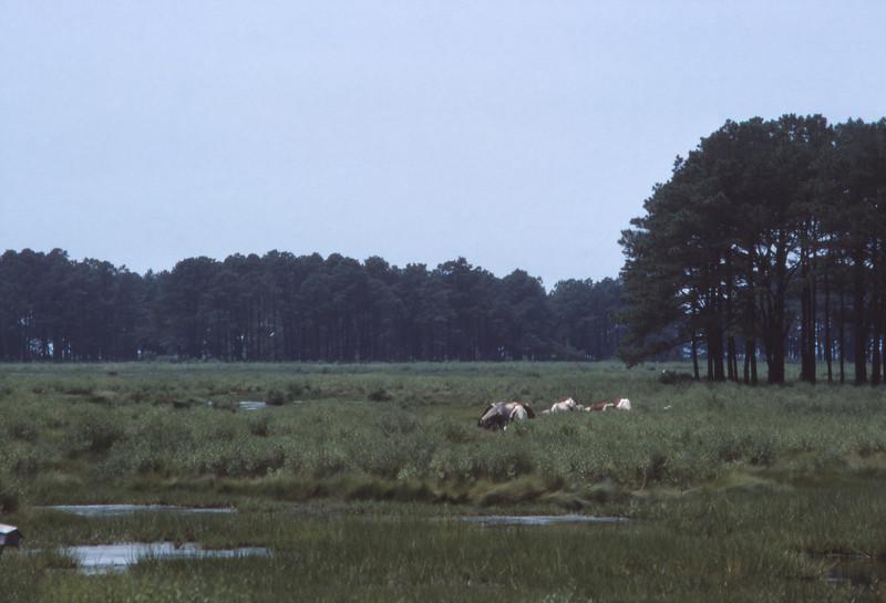 Chincoteague 1981-07 011.jpg