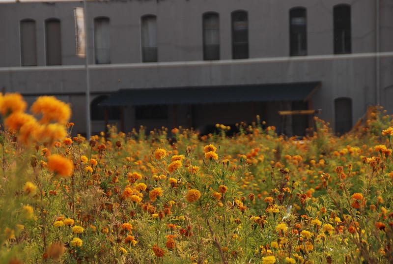 2008-11, Flowers & Junction Block