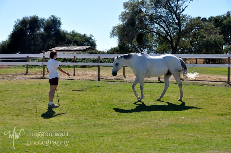 EB&Horses-143.jpg