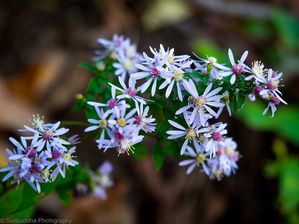 2015-10-17 - Autumn Flowers