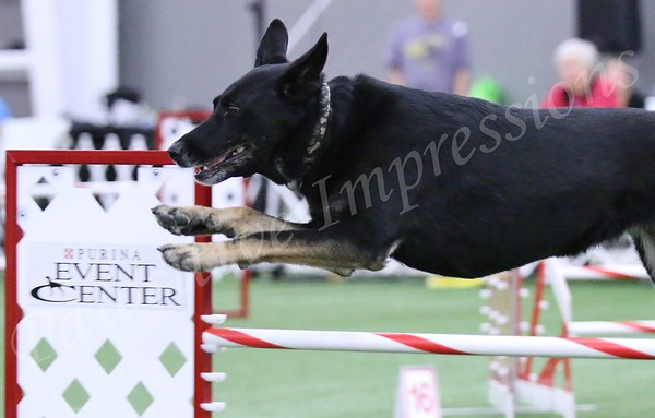 Tues 2015 GSDCA National Specialty Ex/Masters Standard Agility 10 13 15