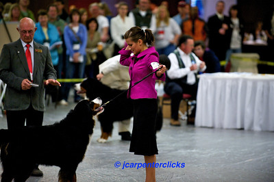 Best of Breed Competition - Group III