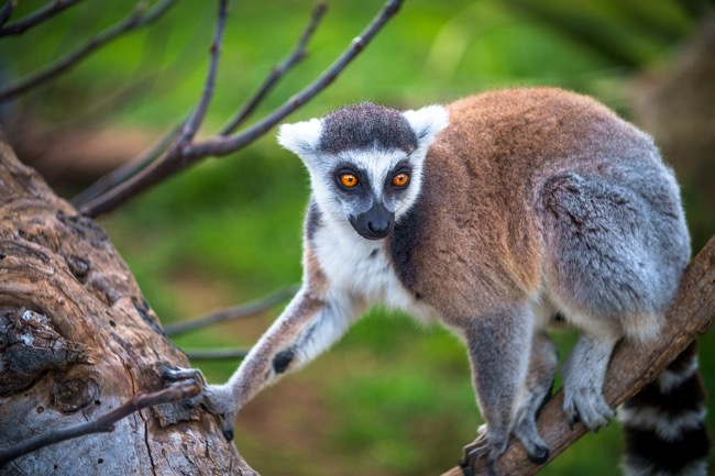 Prepare your trip to Madagascar