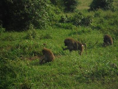 1494239969African-Safari-12.jpg