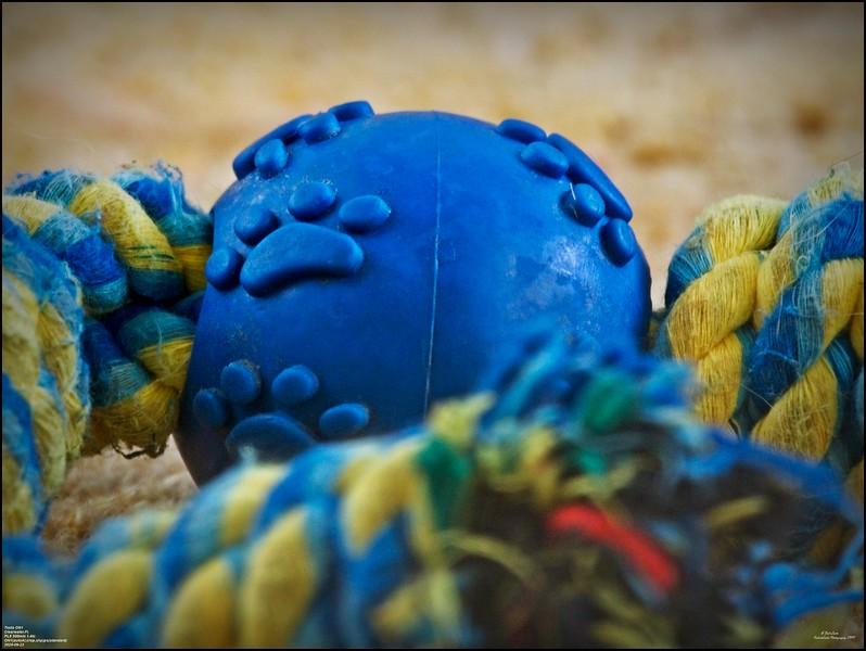 _9220003_tipz toy.jpg