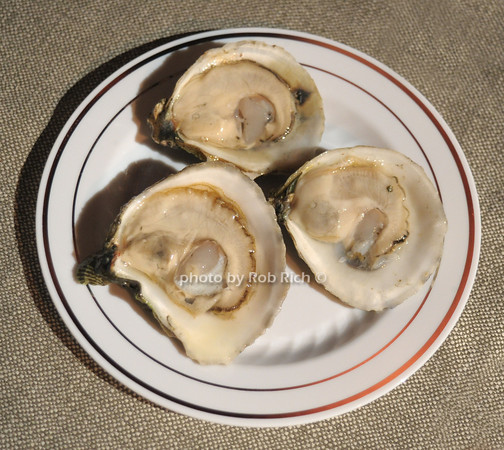 Oysters from Huntington Bay photo by Rob Rich/SocietyAllure.com © 2014 robwayne1@aol.com 516-676-3939