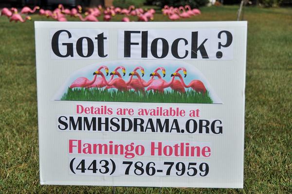 SMMHS Drama Club Flamingo Flocking 2010