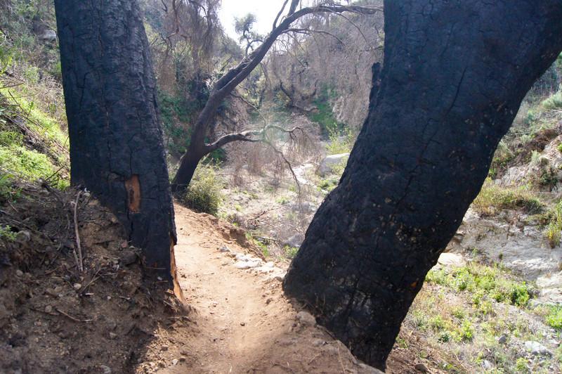 201201291646-El Prieto Trailwork.jpg