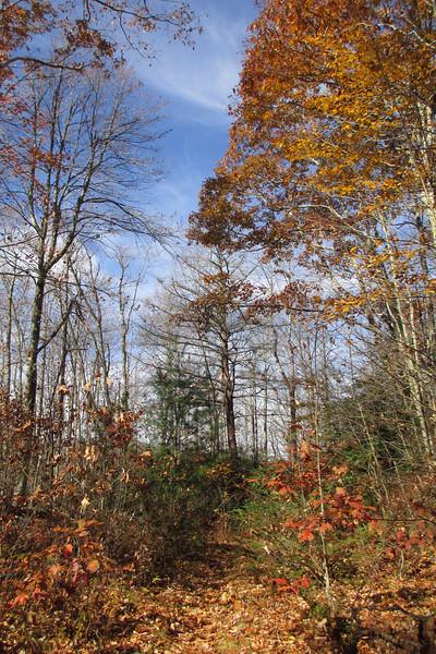 Mac's Gap Trail - 3,800'