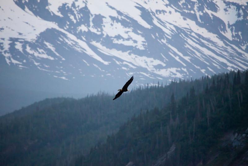 Alaska Copper River-8361.jpg