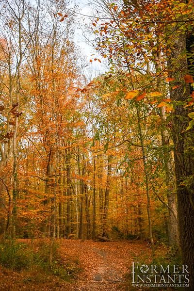 An Orange Hike