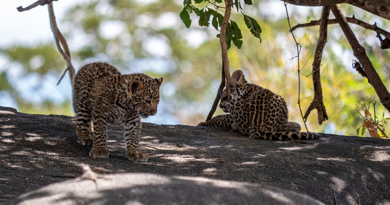 Tanzania-Serengeti-National-Park-Safari-Leopard-02.jpg