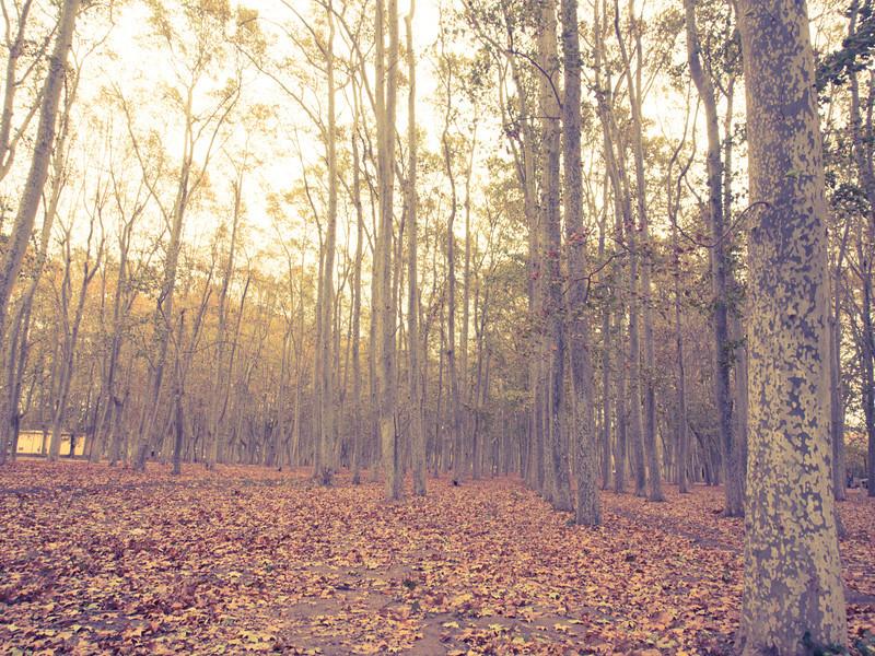 girona woods.jpg