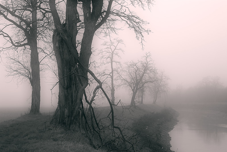 Dying Trees