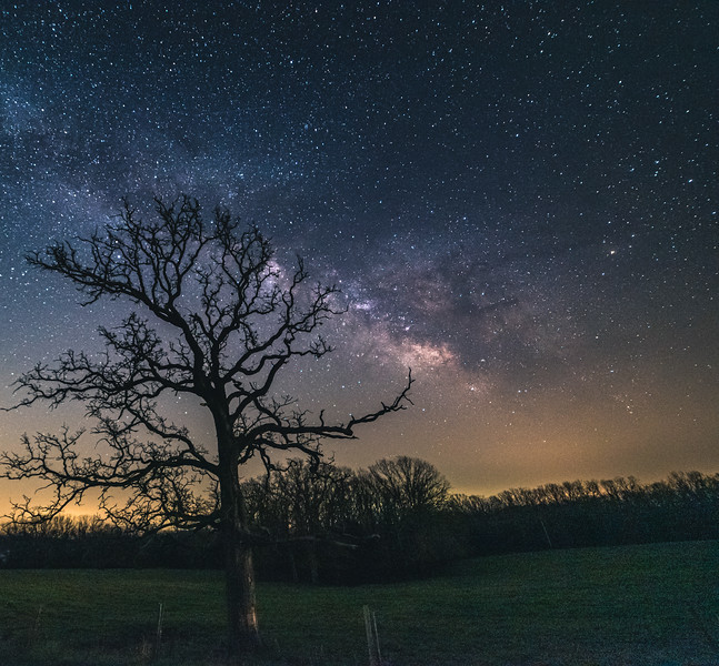 Branches into the stars
