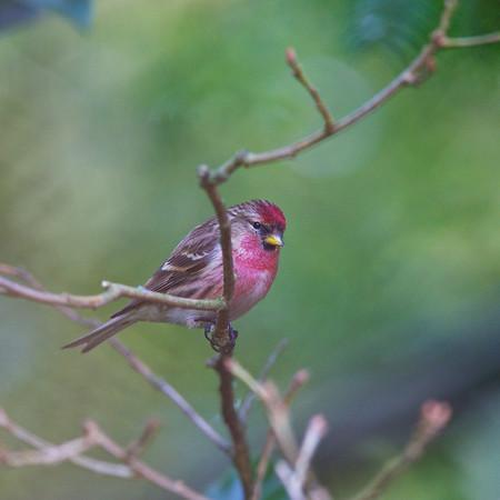 Birds, moor hall