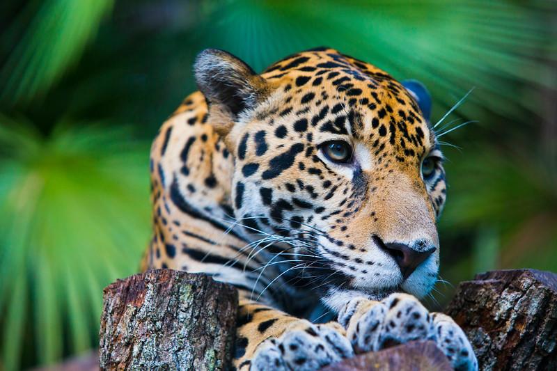 Wildlife in Belize