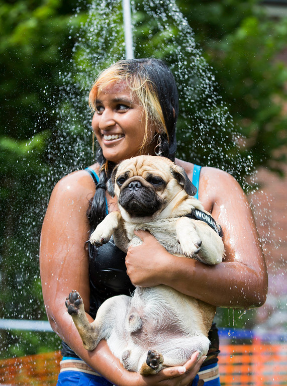 """. Jasmina and her pug dog Eddy take a shower during a pup dog meeting in Berlin, Germany, Saturday, Aug. 3, 2013. Some 40 pup dogs and their owners met in Berlin for the \""""4th International Pup Dog Meeting\"""" including a dog race. (AP Photo/Gero Breloer)"""