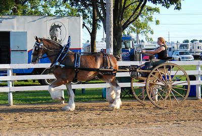Clydesdale Ladies Cart
