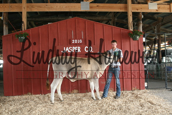 Dairy Cattle Show - Tuesday