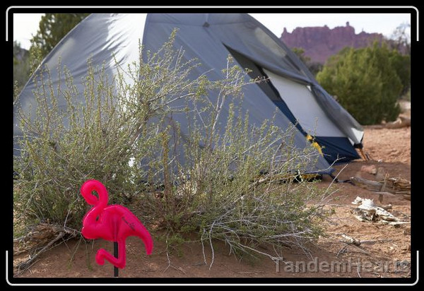 Doing their part to introduce non-native species, Sarah and Bill released these Pack Flamingos into the camp ground.