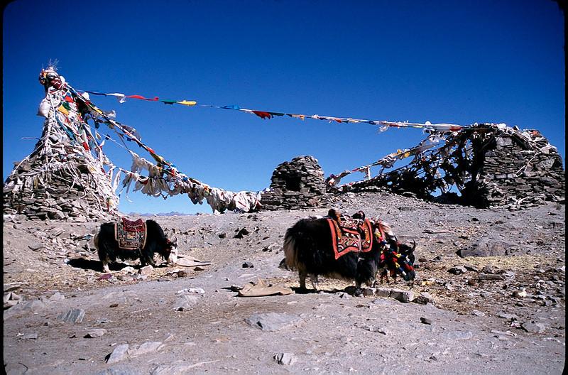 Tibet_Shanghai1_079.jpg