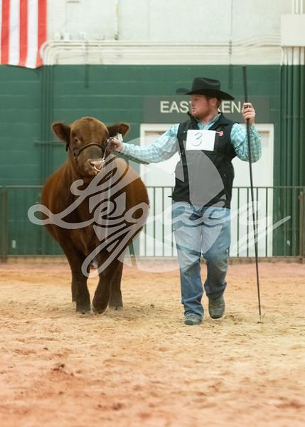 Candid Bulls