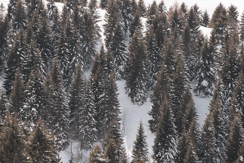 Fedgo-a73, Monte Asolone, Montegrappa, Neve-07 marzo 2020-8.jpg