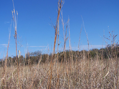 Meadow Preserve - Grasses