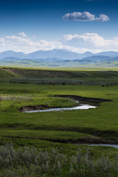 Pekisko Creek and Mountains