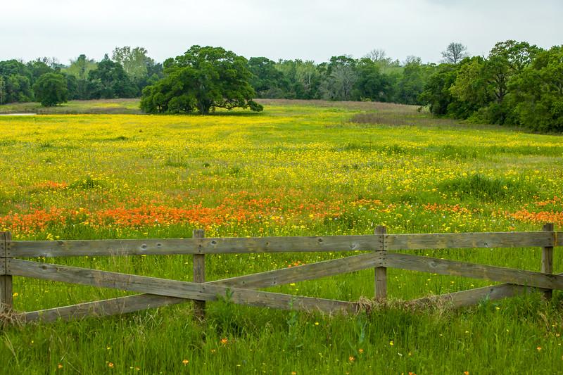 2015_4_3 Texas Wildflowers-7597.jpg