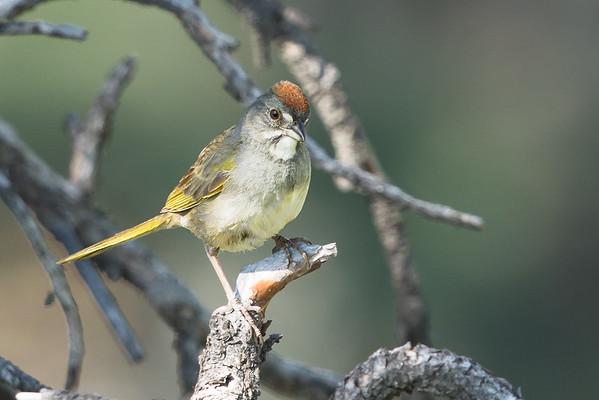 Sparrows & Associates