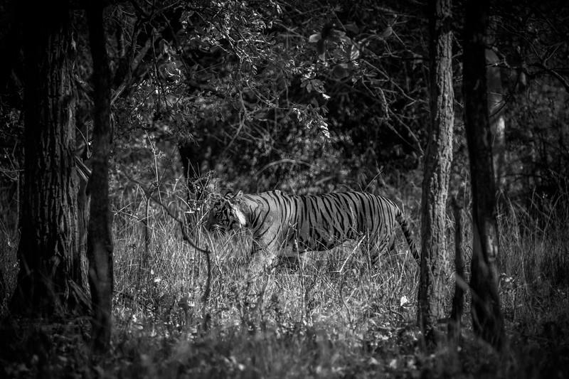 India_April_2019-587.jpg
