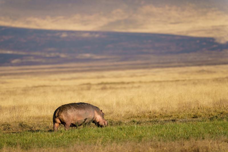 NgorongoroCrater-20181004-1326.jpg