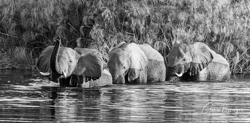 Elephants Botswana-14.jpg