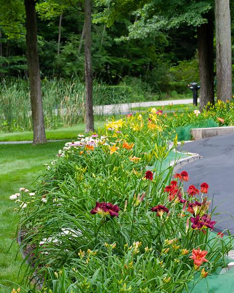 20190718 Daylilies and Flowers-6478.jpg