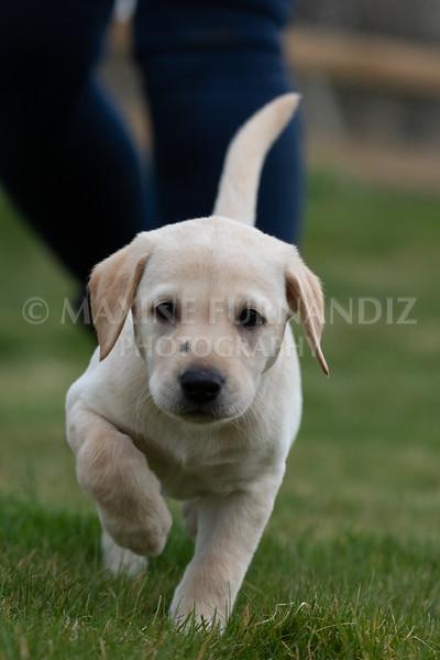 Weika Puppies 24 March 2019-6669.jpg