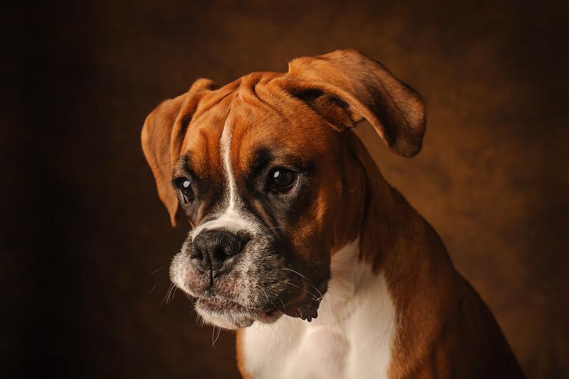 Pets_artfuldog_12.jpg