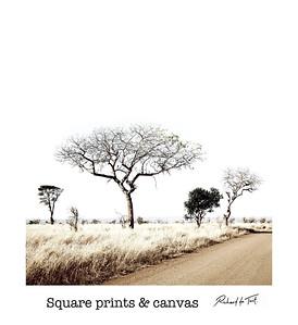 Square Prints & Canvas