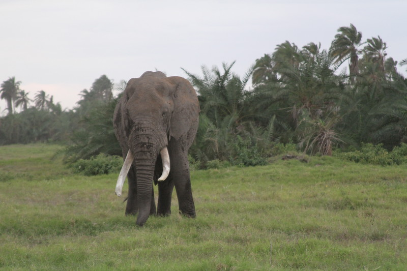 Kenya 2019 #2 1475.JPG