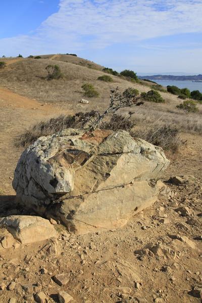 Tiburon Ridge - The Martha Property