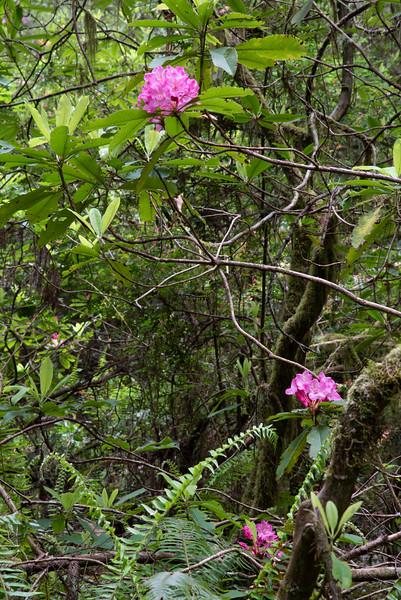 redwoodsFin29-1211.jpg