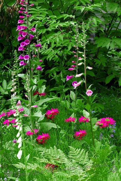 Garden in Seldovia - Judith Sparhawk