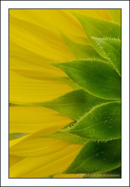 Rohrbaugh Photography Flowers 51.jpg