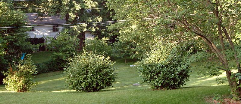 June 28, 2003:  We've got a decent-sized yard .  .  .