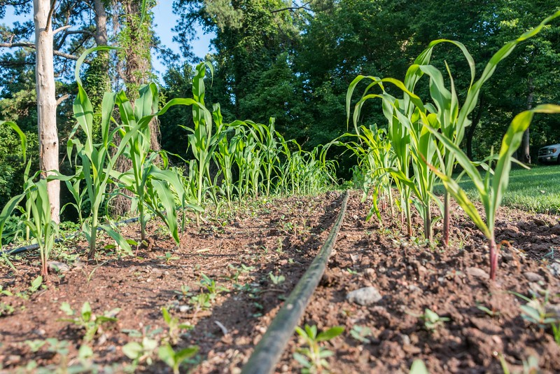 June 13 Farm Chastain-10.jpg