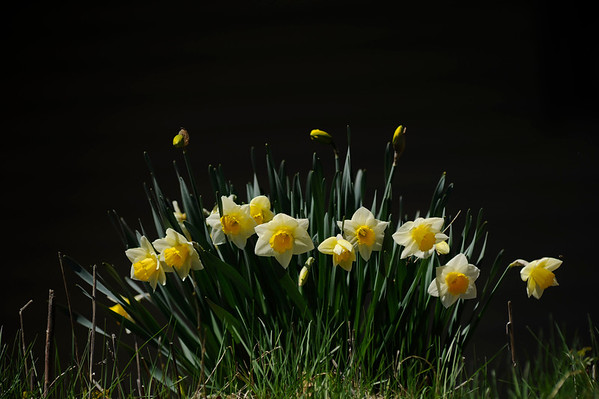 2014 Spring Flowers Gates