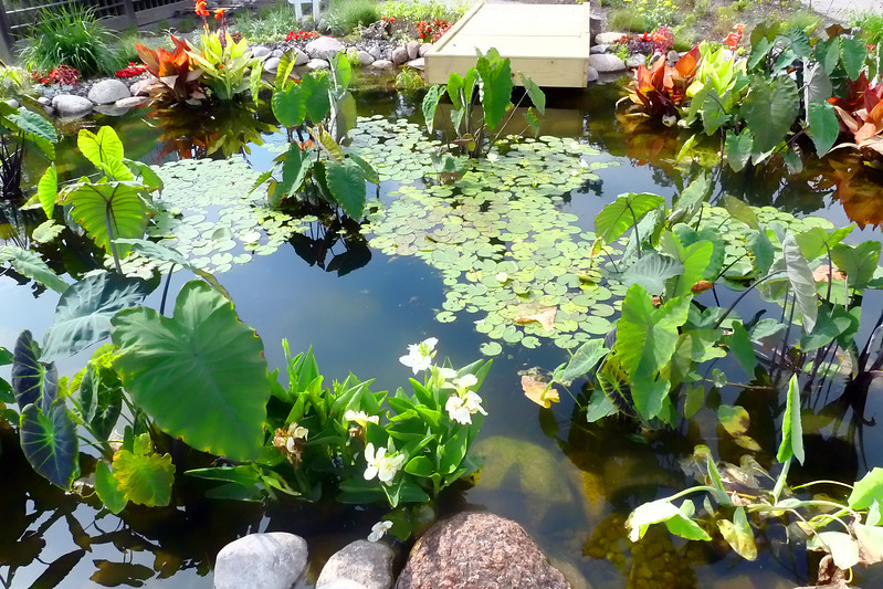 Lily pond #4.jpg