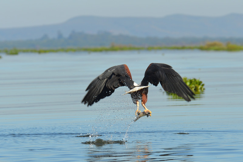East Africa Safari 140.jpg