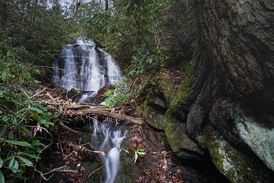 Headwaters Hoods Creek